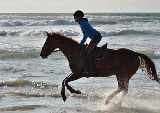 Balade, trot, galop sur la plage à 20mn de la pension
