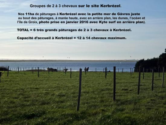5 chevaux au calme à Kerbrézel 24 janvier 2016 au bord Petite mer de Gâvres