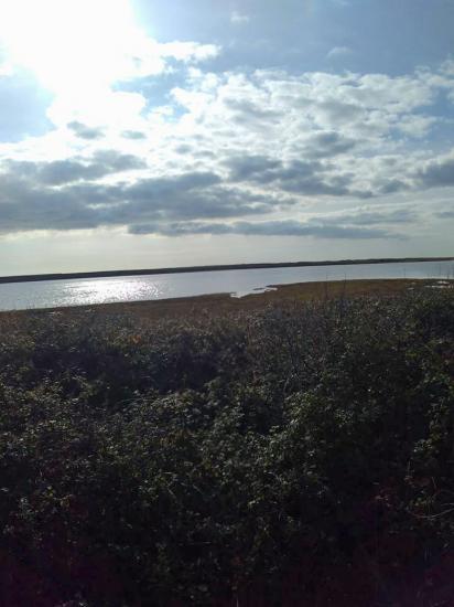 Pâturages à Kerbrézel juste au bord de la Petite mer de Gâvres
