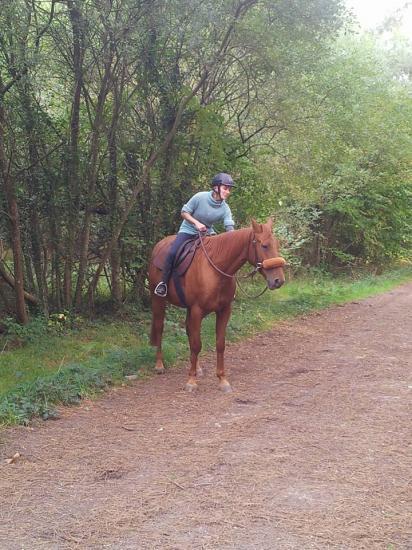Balade au calme dans les bois en sortant de la pension