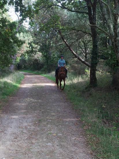Ballade chemins dans les bois en sortant de la pension