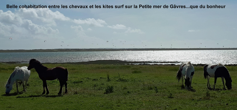 Belle cohabitation entre les chevaux et les kites surf sur la Petite mer de Gâvres