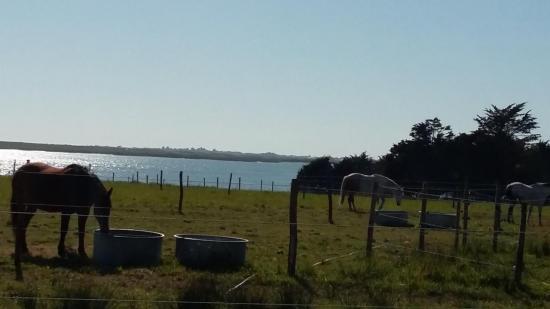 chevaux au calme dans les très grands pâturages à Kerbrézel
