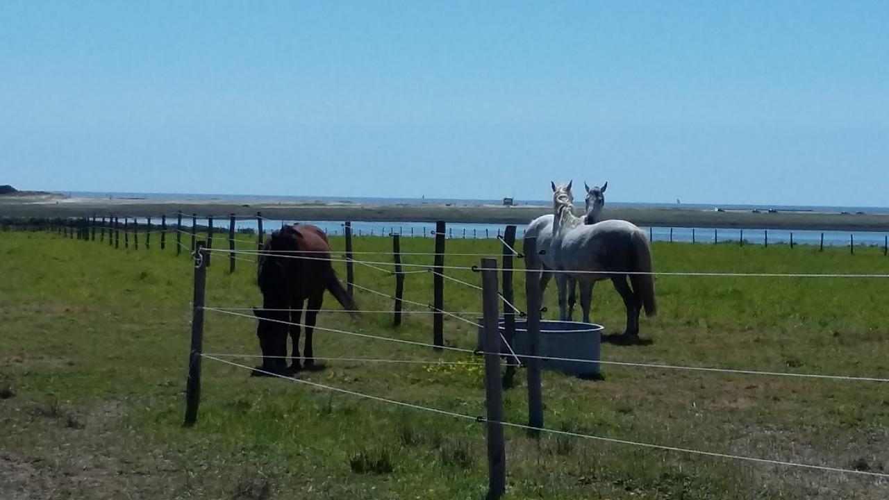 chevaux dans les grands pâturages à Kerbrézel face au littoral