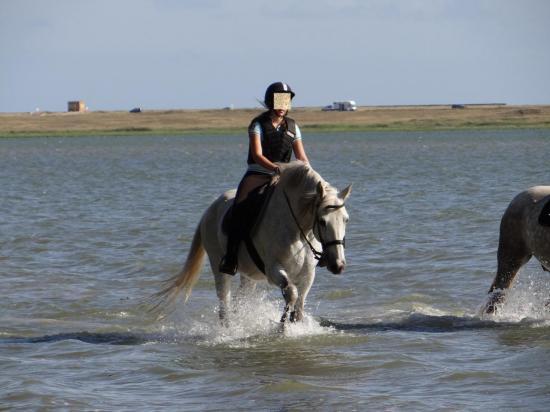 2 - Balade dans la petite mer de Gâvres à 2mn à cheval de la pension