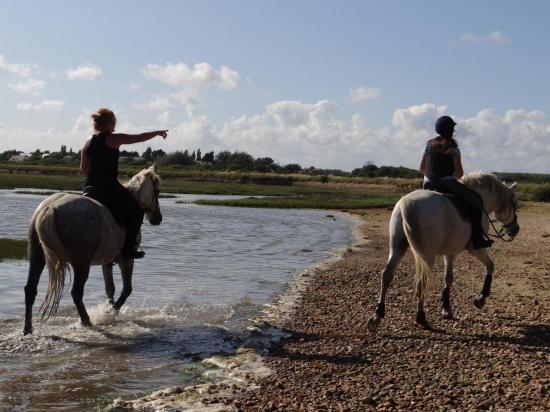 9 - Balade dans la petite mer de Gâvres à 2mn à cheval de la pension