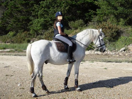 28 - Balade dans la petite mer de Gâvres à 2mn à cheval de la pension