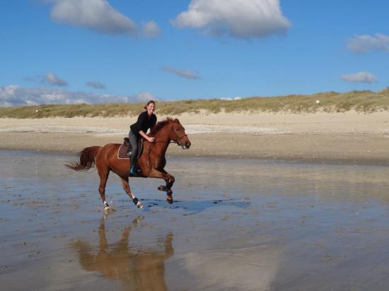 Galop sur le sable mouillé de la plage du Linès à 20mn de la pension