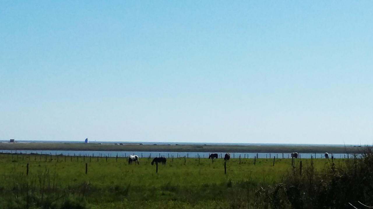 Pâturages au bord de la Petite mer de Gâvres et face à la plage