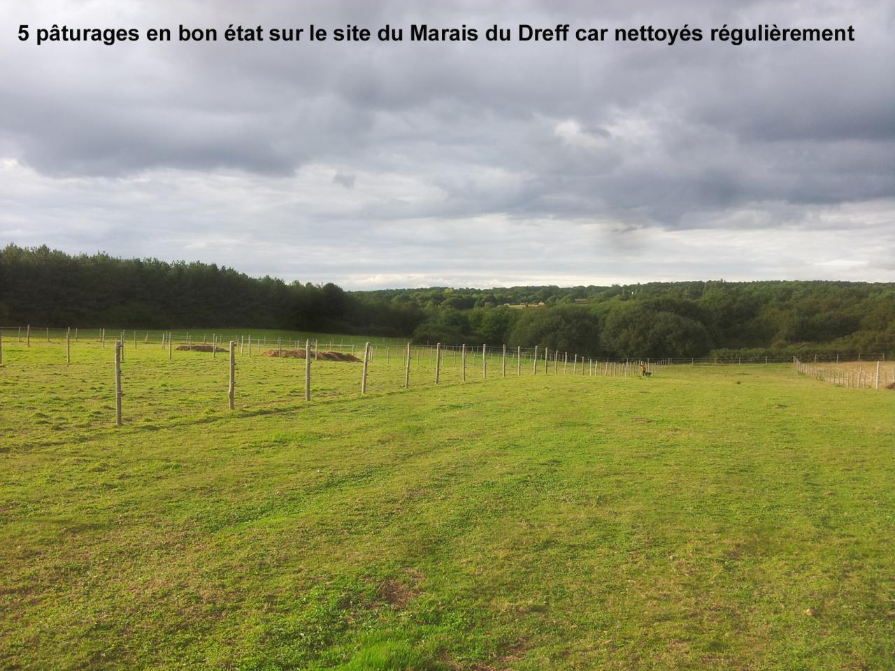 pâturages en bon état au Marais du Dreff car nettoyés par cavaliers