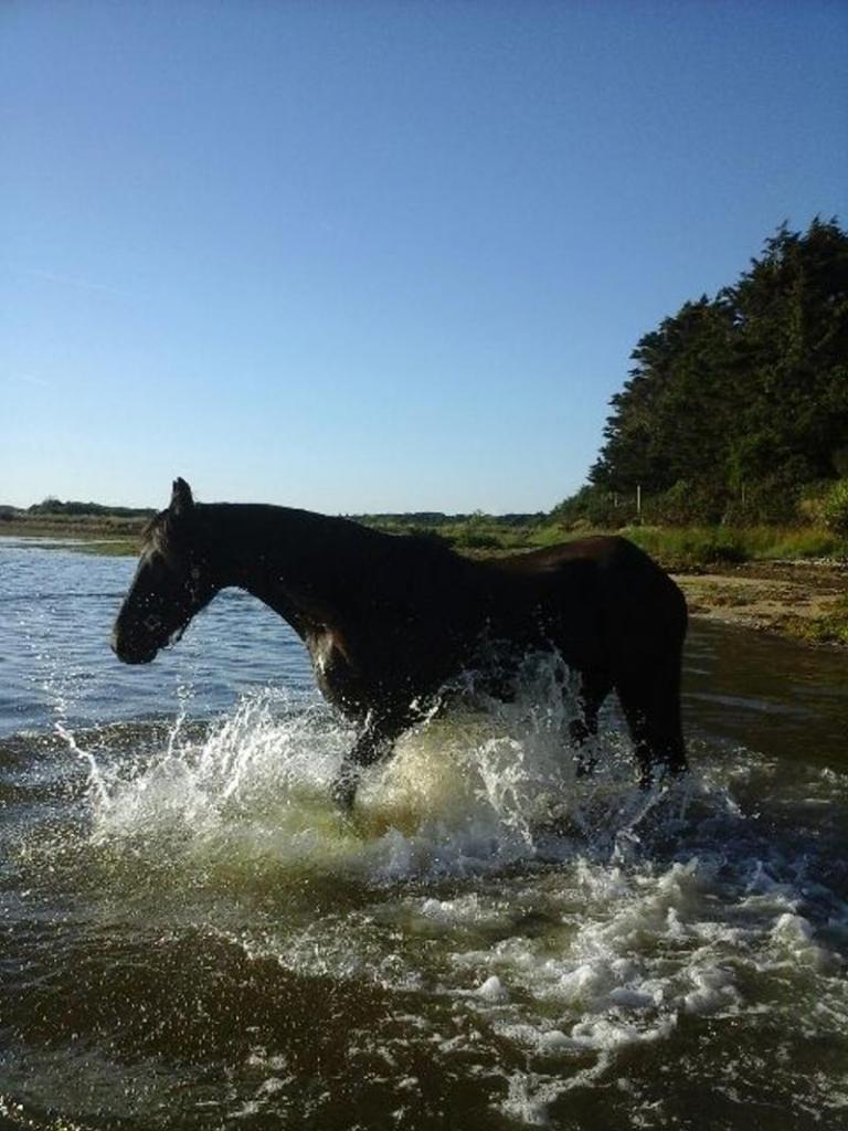 photo 1 baignade dans la petite mer de Gâvres