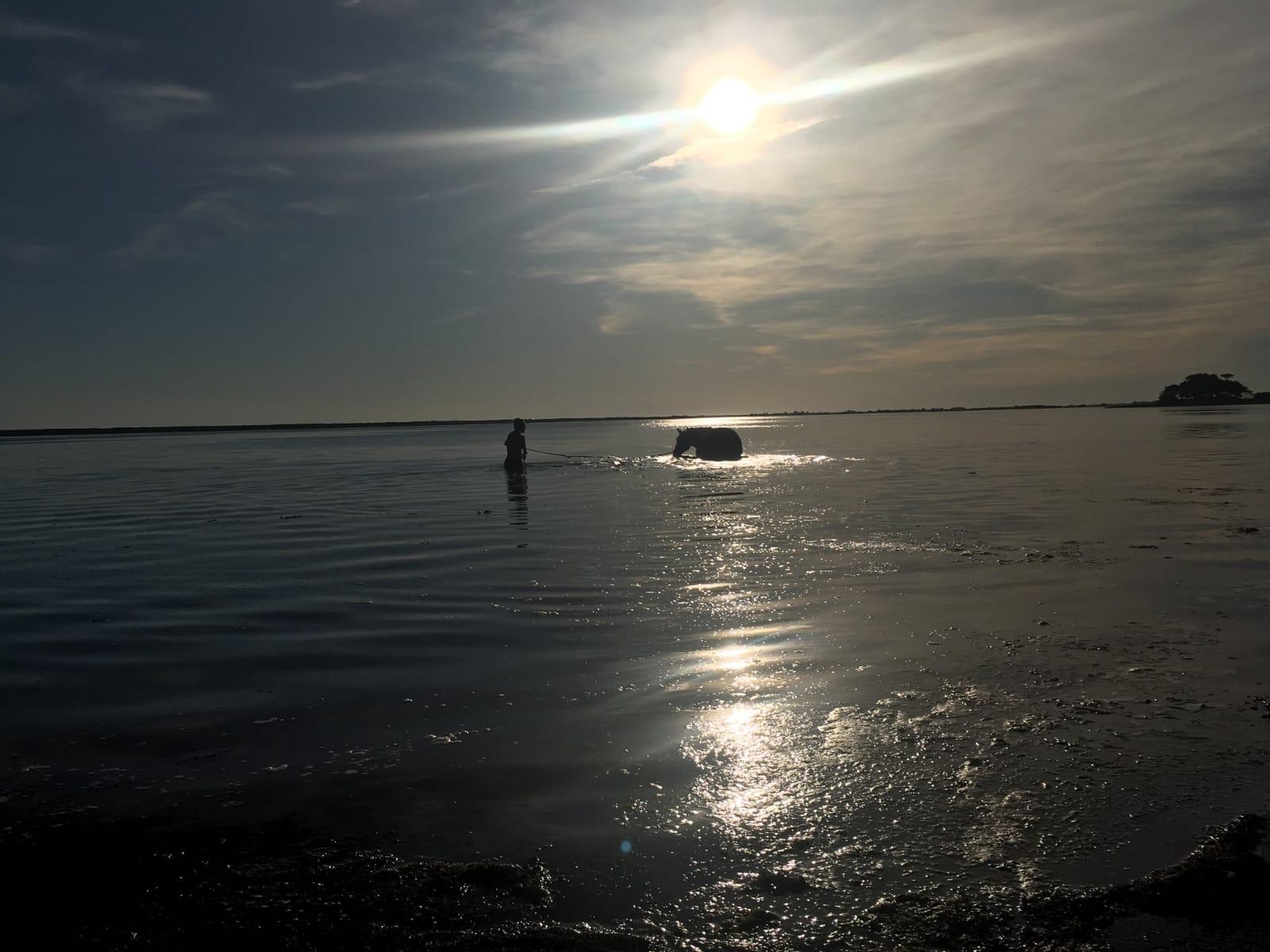 Baignade en soirée dans la Petite mer de Gâvres 16 septembre 2019