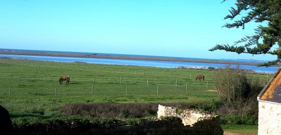Chevaux à Kerbrézel au calme au bord de la Petite mer de Gâvres en mars
