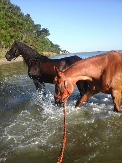 photo 5 baignade dans la petite mer de Gâvres