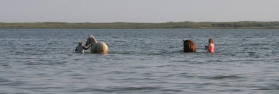 Chevaux et cavalières dans la Petite mer de Gâvres à marée haute