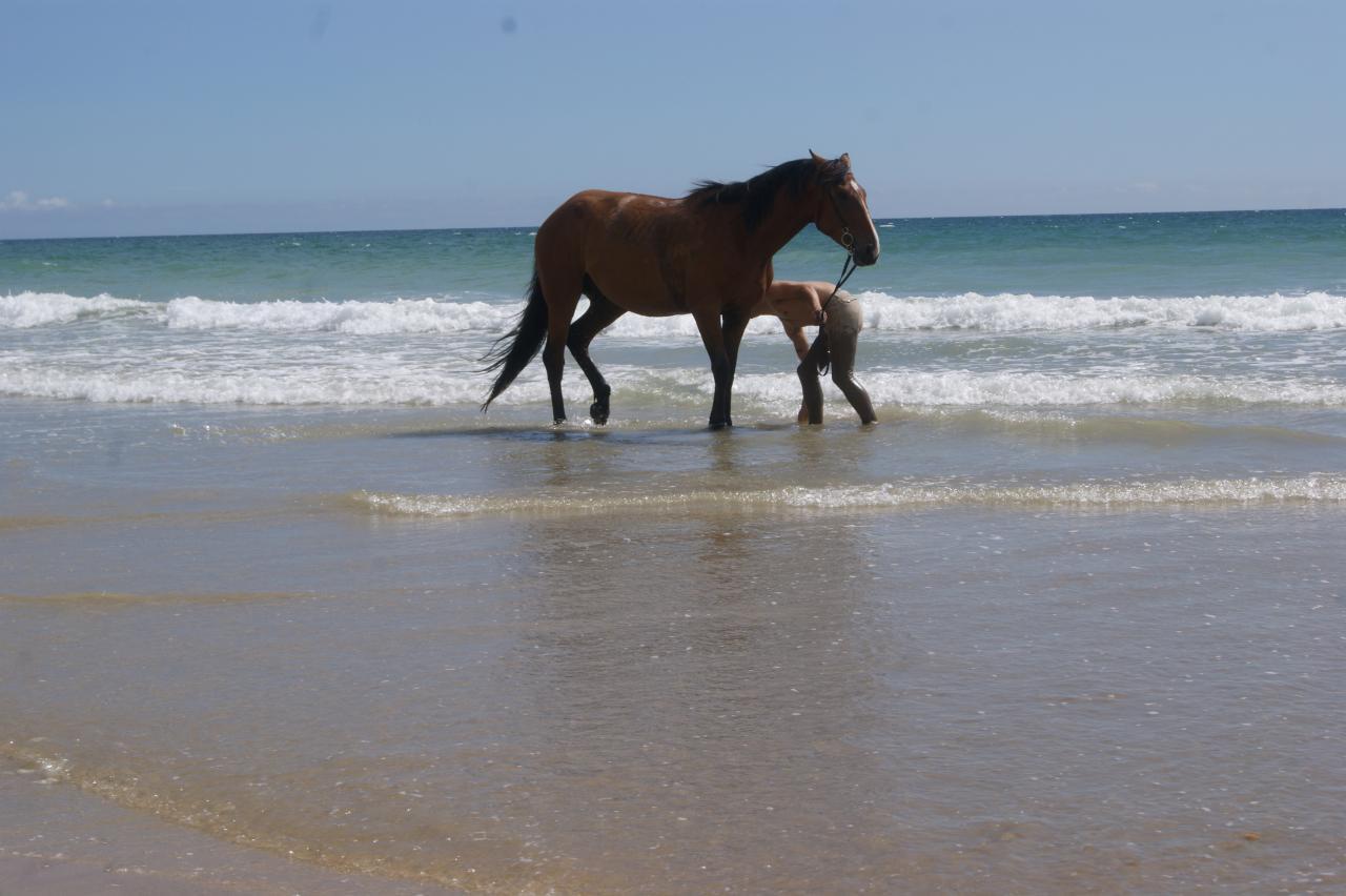La plage du Linès à 20mn à cheval de la pension