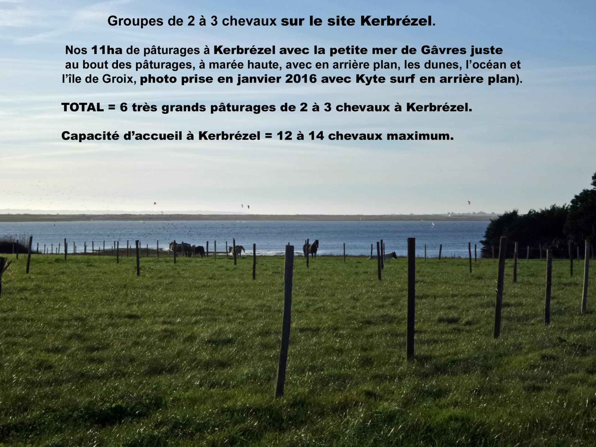 5 chevaux au calme a kerbrezel le 24 janvier 2024