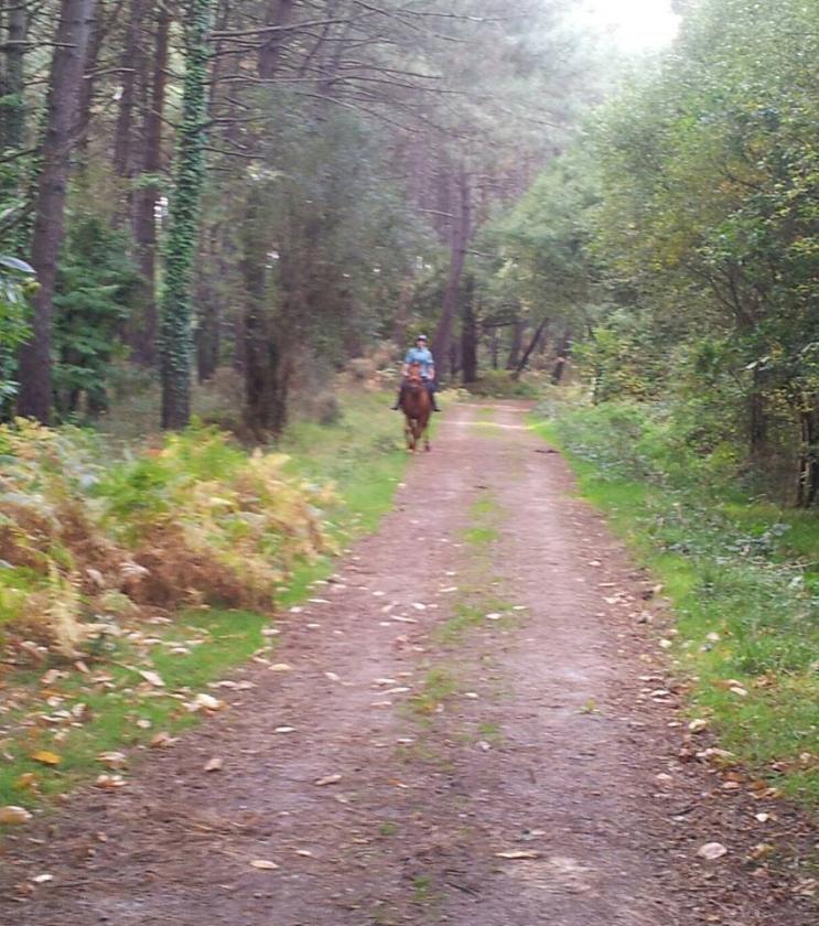Ballade dans les bois en sortant de la pension