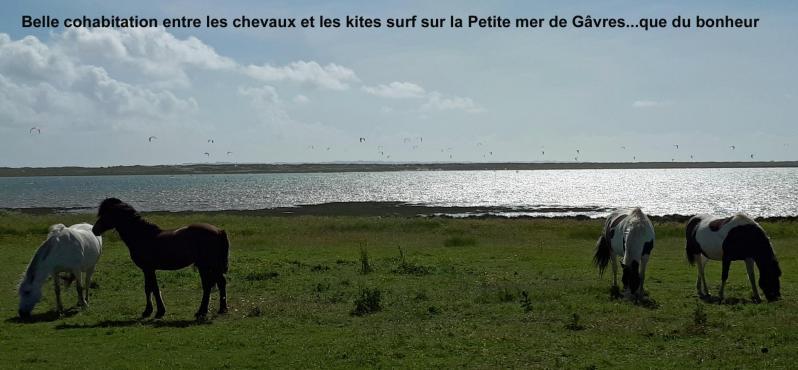 Belle cohabitation entre les chevaux et les kites surf sur la petite mer de gavres