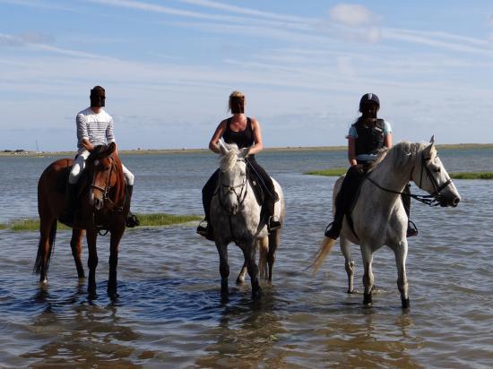 Entete chevaux dans petite mer de gavres photo non reduite