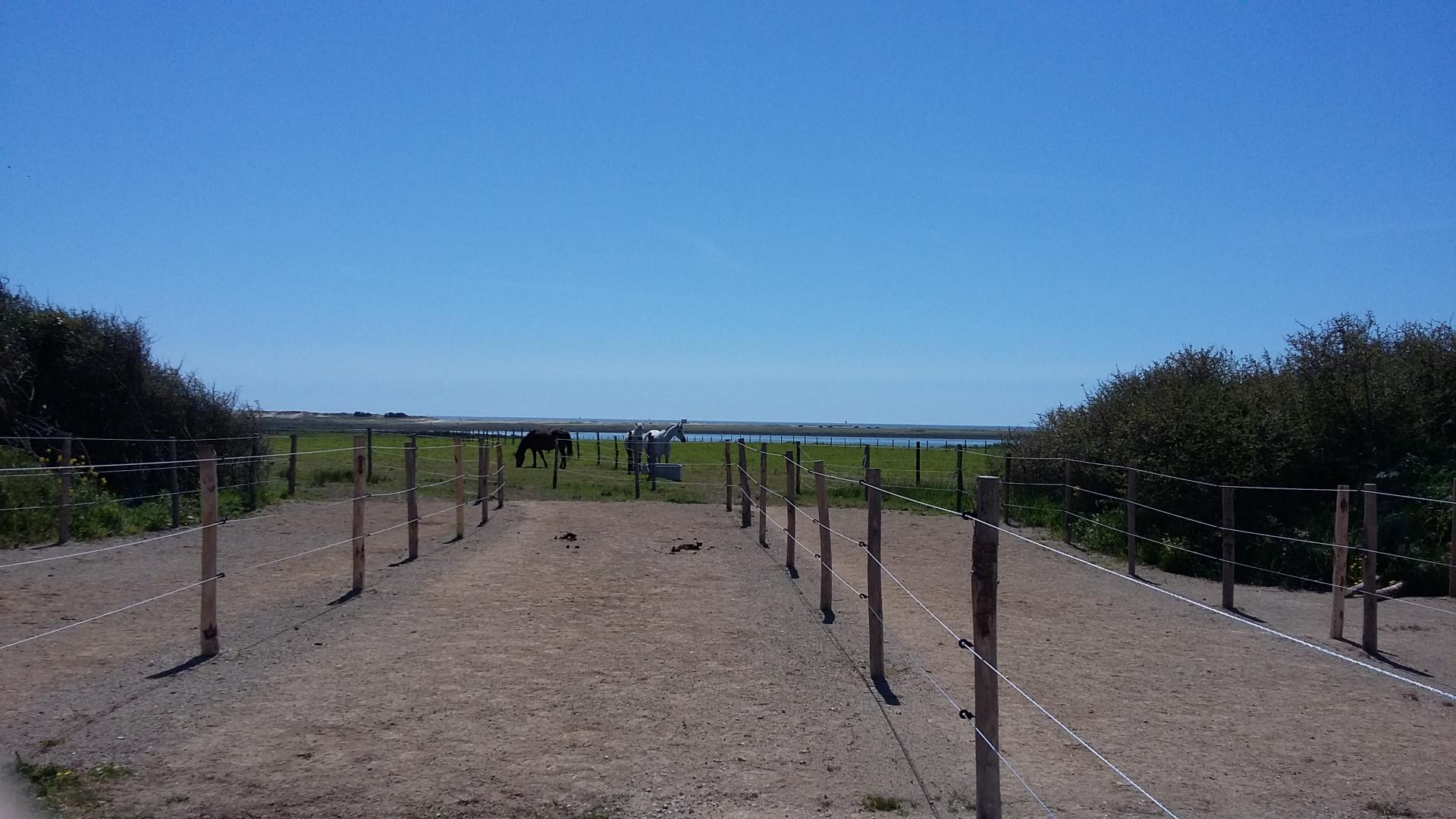 Entete chevaux grands paturages derriere haie plage petite mer photo non reduite 1