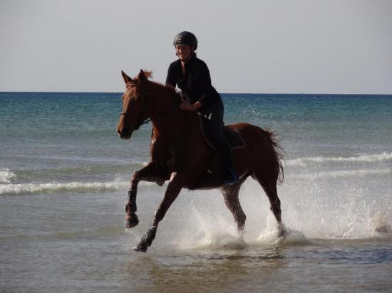 Galop dans l'eau de mer sur la plage du Linès