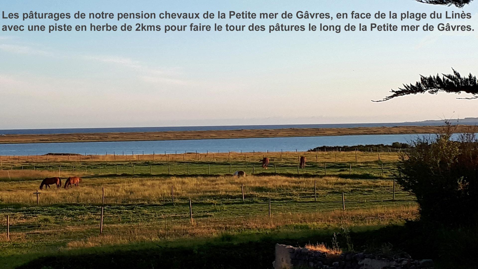 Les paturages de notre pension chevaux de la petite mer de gavres